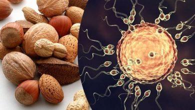 19 خوراکی معجزه آسا در افزایش تعداد اسپرم